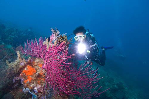 Scuba Diving Kota Kinabalu