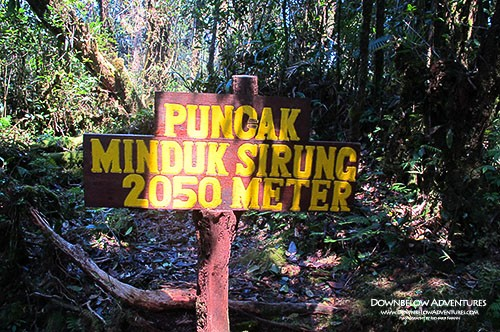 Jungle Trekking Mt Alab Day Trip