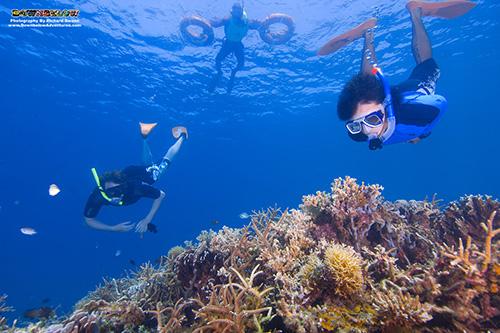Snorkelling Safari - See the Best Coral Reefs in TARP