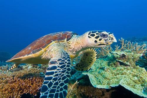 Turtle in TARP