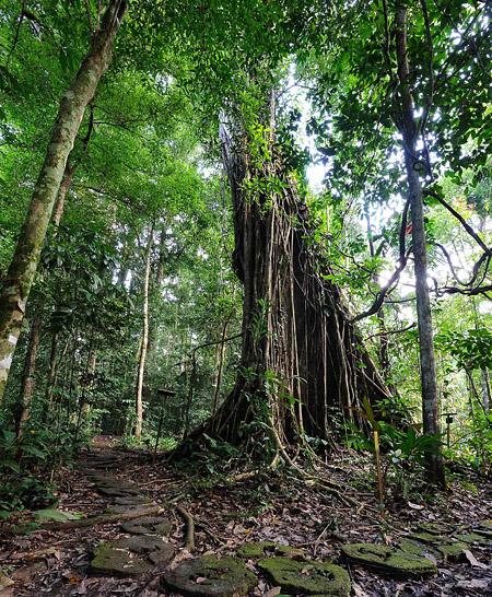 Danum Valley - Nature Trail
