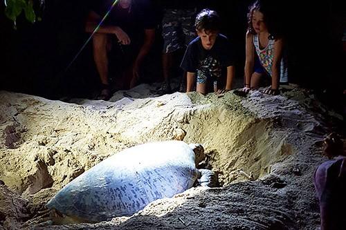 Turtle Selingan Island
